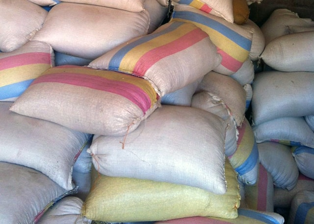 Determined to Develop Maize for School Feeding Program Arrives 1