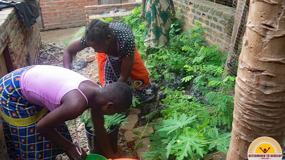 Determined to Develop Malawi Reforestation 1