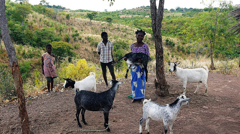 Determined to Develop Malawi Goat Lady 1